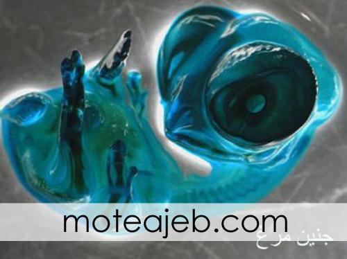 janin morgh - موجودات ریز +عکس