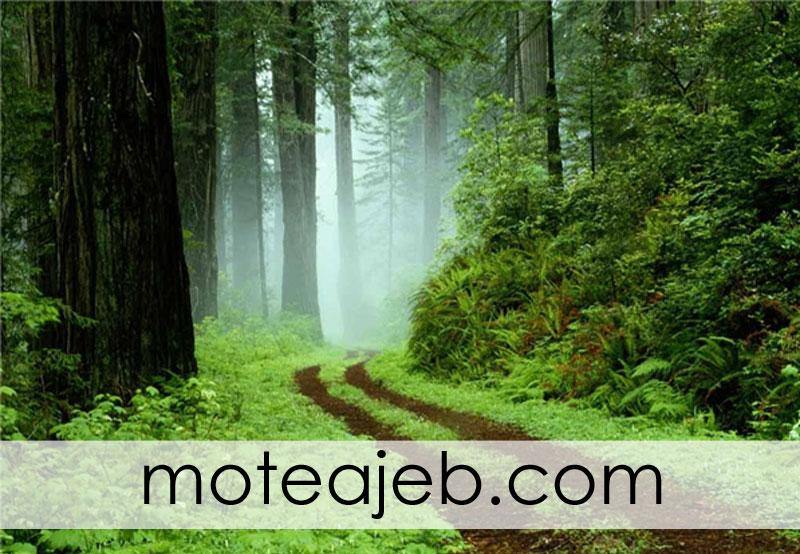 پارک جنگلی گیسوم در تالش