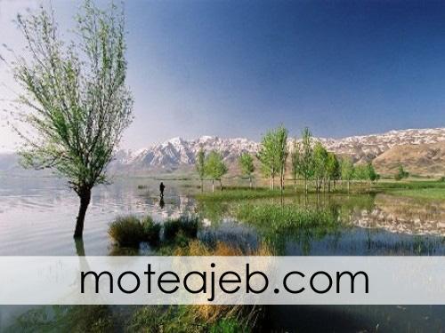 chokhor-talabi-dar-brojen-1